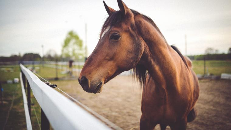 Horses and the Stories They Tell