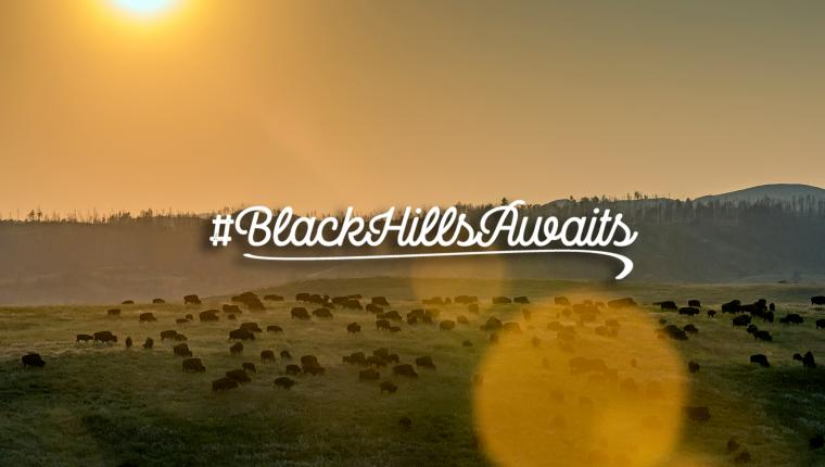 A Peace of Nature | #BlackHillsAwaits