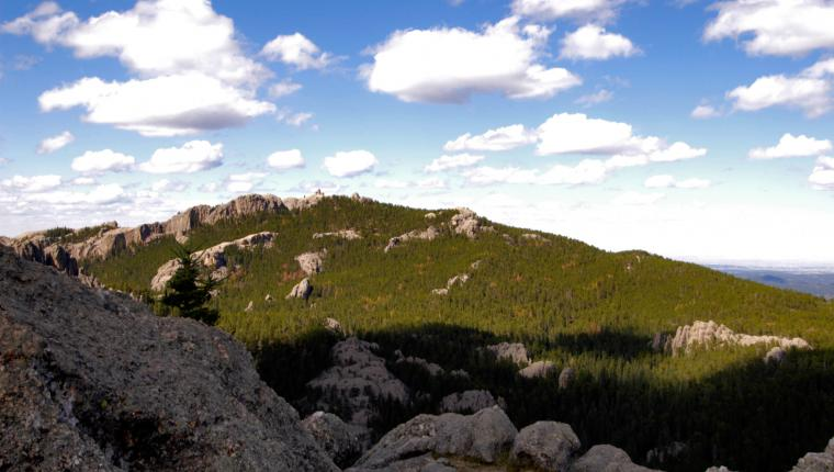 Custer National Forest