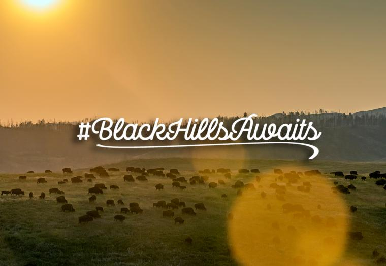 A Peace of Nature | #BlackHillsAwaits
