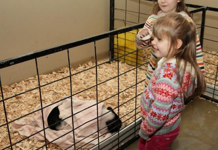 First Interstate Bank Petting Zoo
