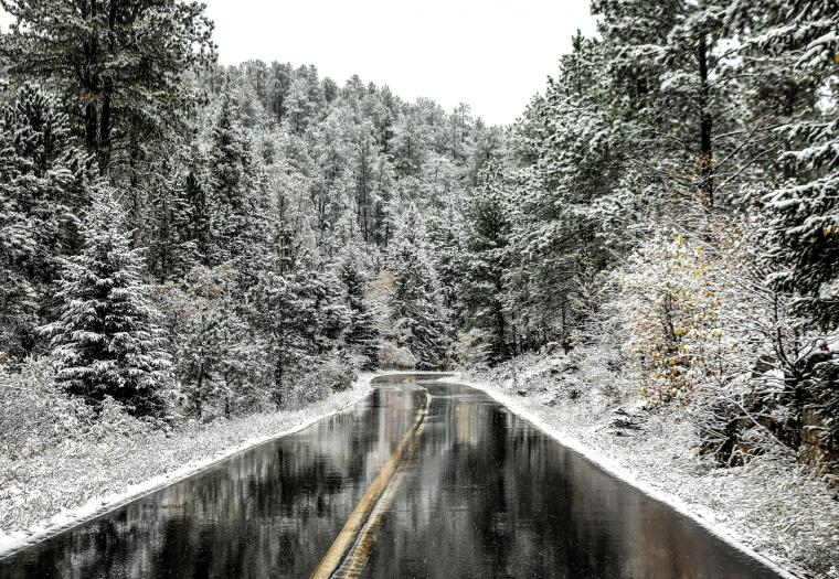 Snowy Day in Custer State Park