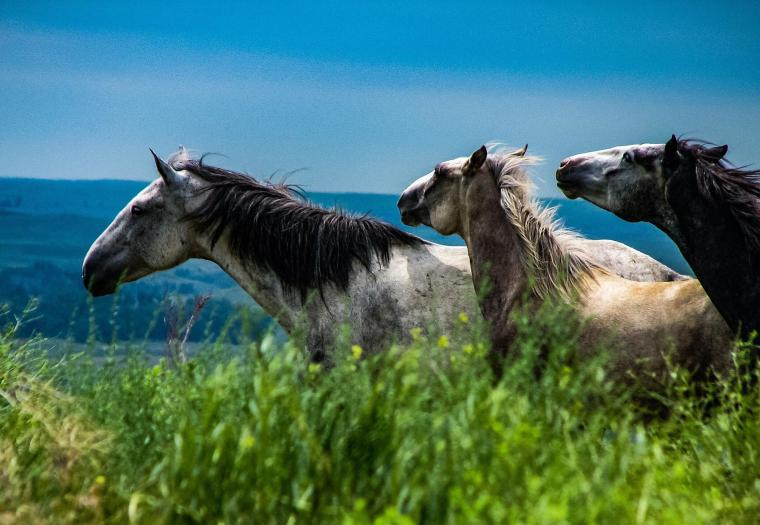 Spirit of the Southern Hills at the Black Hills Wild Horse Sanctuary