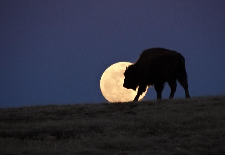 Super Moon in Wind Cave National Park