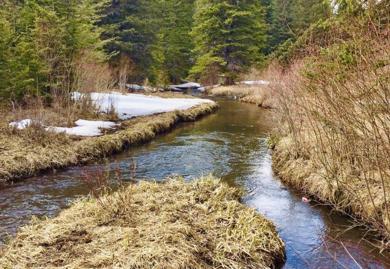 Ditch Creek