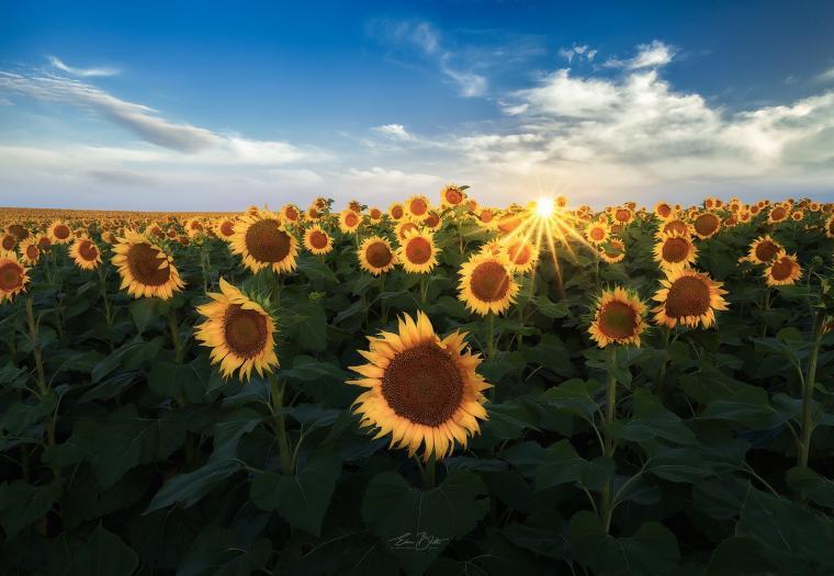 Field of Suns