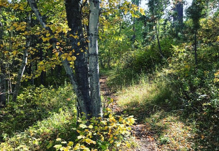 Upper Ogden Creek Trail