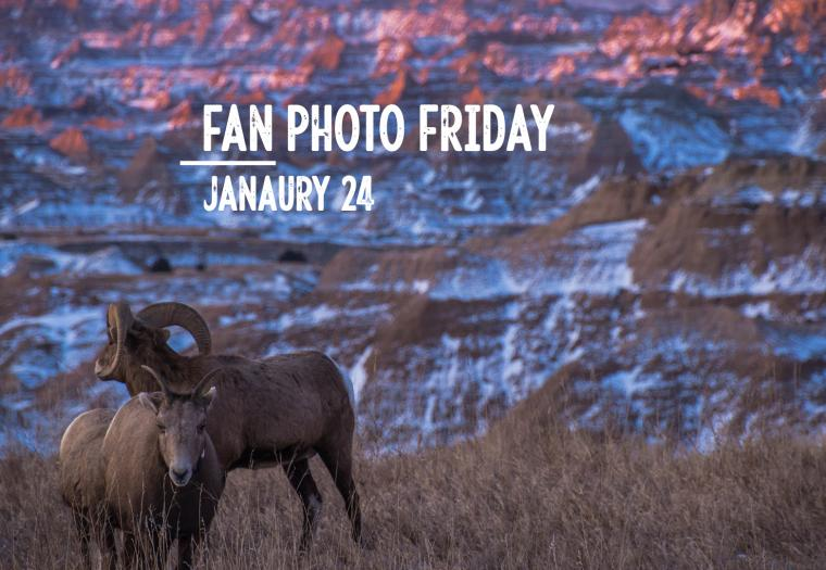 Fan Photo Friday | Jan. 24, 2020