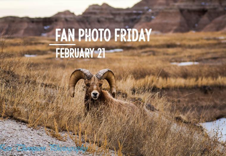Fan Photo Friday | Feb. 21, 2020