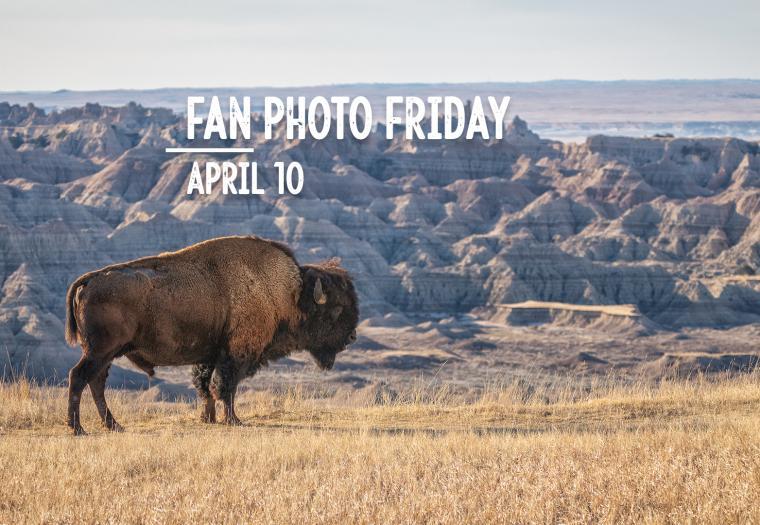 Fan Photo Friday   April 10, 2020