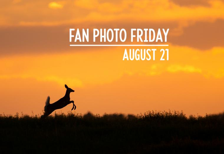 Fan Photo Friday | August 21, 2020