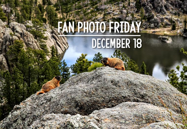 Fan Photo Friday | December 18, 2020
