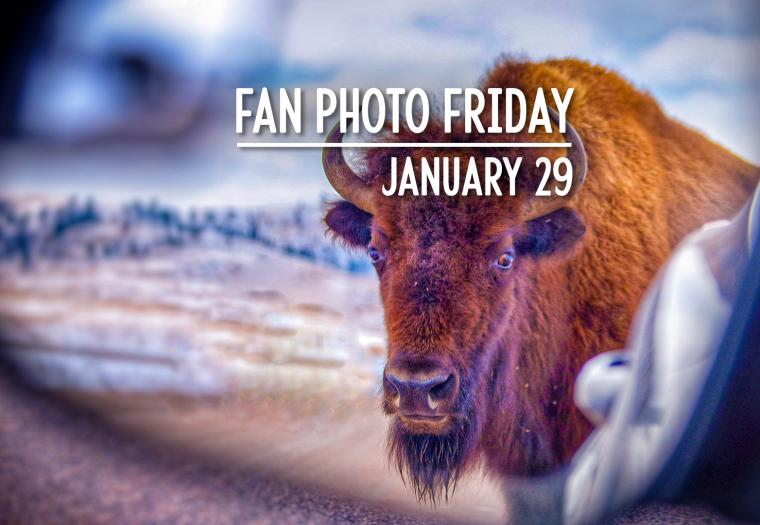 Fan Photo Friday | January 29, 2021