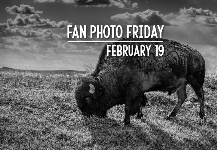 Fan Photo Friday | February 19, 2021