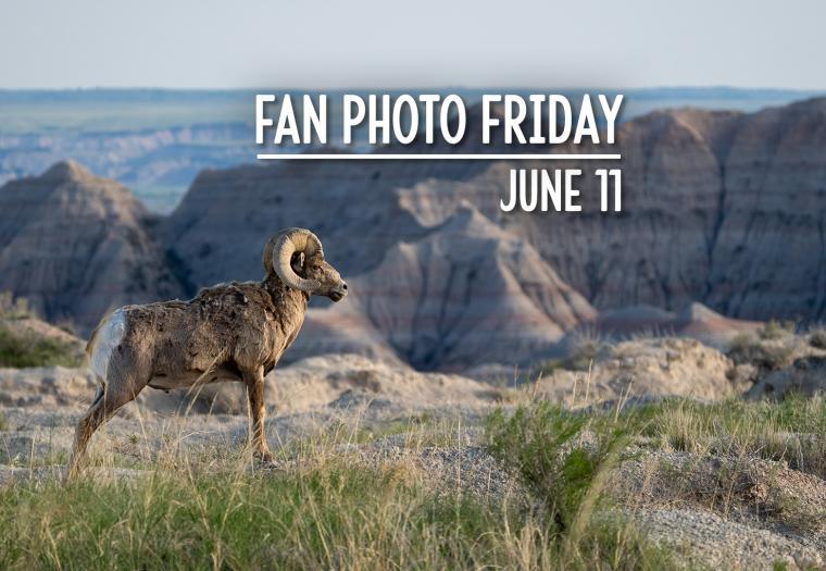 Fan Photo Friday | June 11, 2021