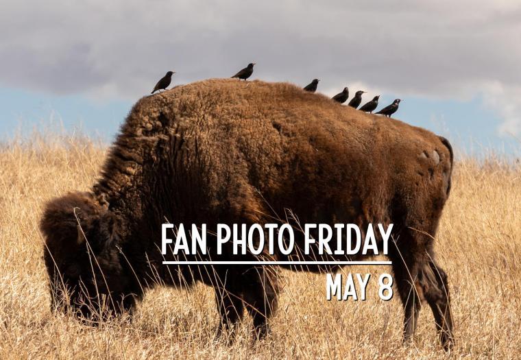 Fan Photo Friday | May 8, 2020
