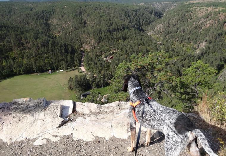 Canine Curiosity