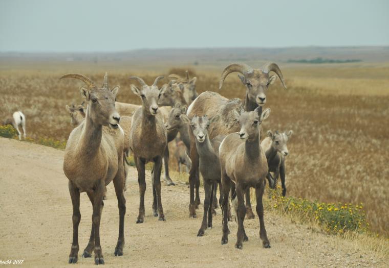 Badlands Roadblock