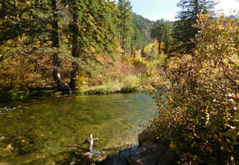 Crystal Clear Waters of Spearfish Canyon Creek
