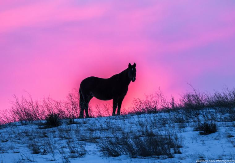 Sunset Steed