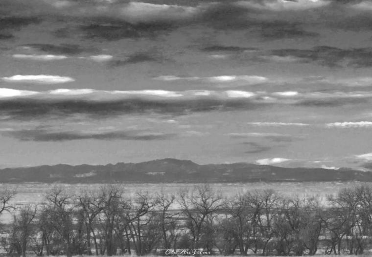Black Hills National Forest in Black & White