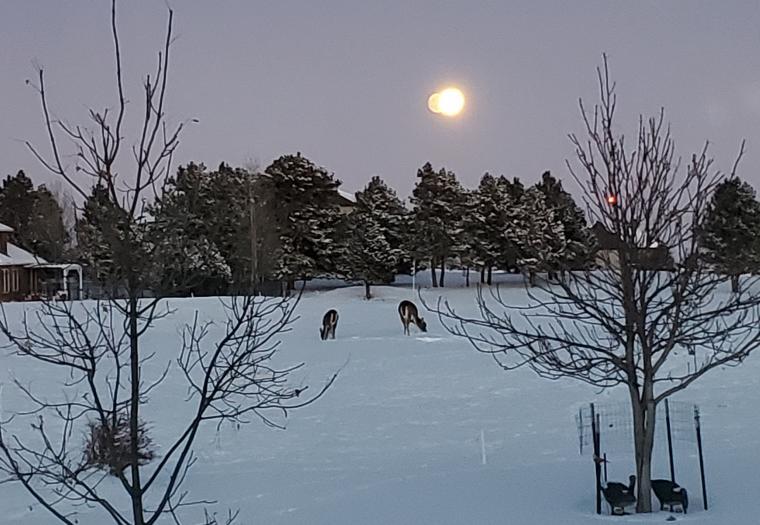 Moonlit Supper
